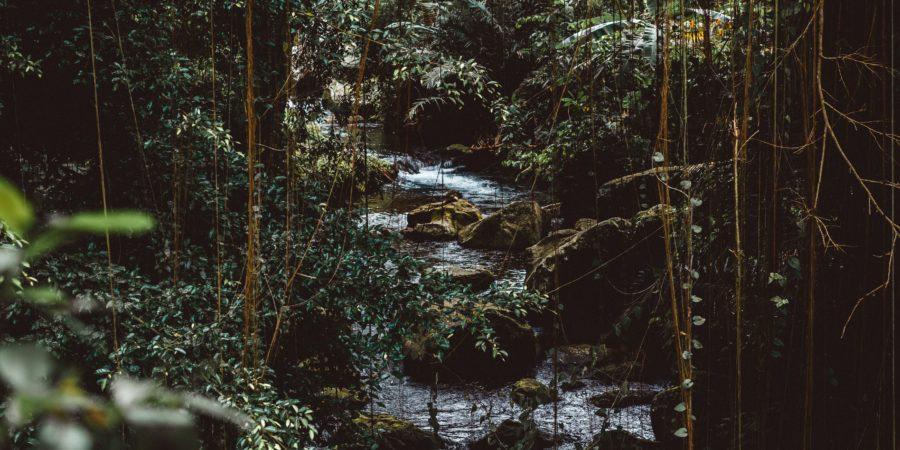 Dżungla pełna technologii
